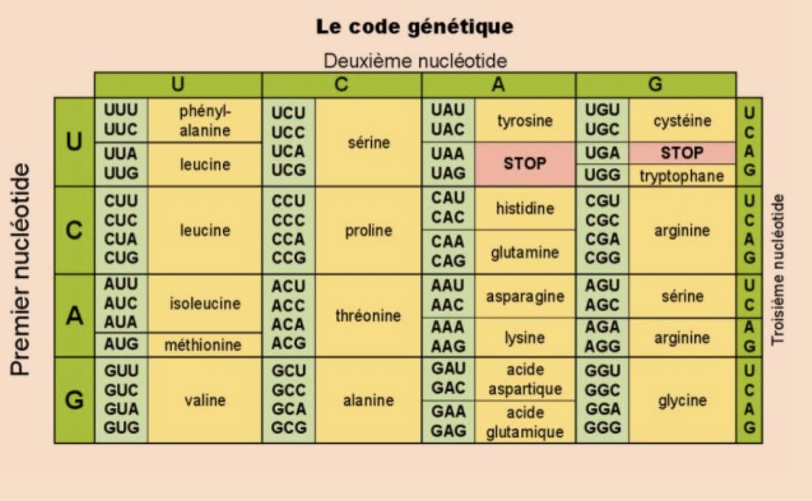 Aix - Marseille - 1ère (Spécialité) - Sciences de la Vie et de la ...